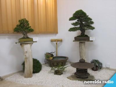 Bonsai Uno